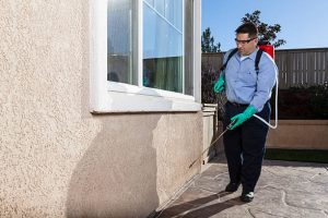 man spraying house from pests