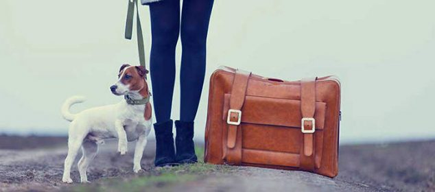 dog travel